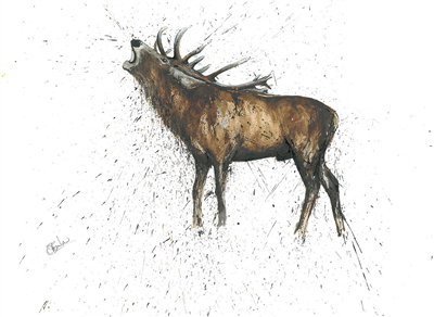 Clare Brownlow Greetings Card- Roaring Stag
