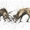 Rutting Stags Postcard Set 1